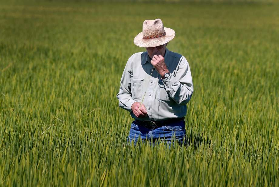 California rice growers stand to prosper from China deal